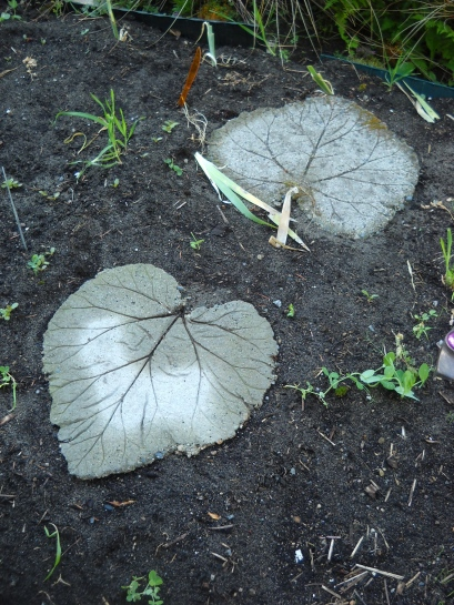 Rhubarb leaf stepping stones in the veg garden.