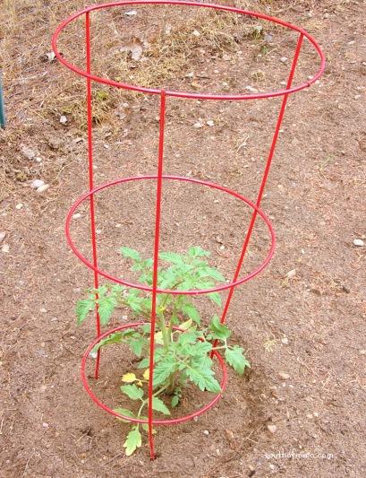 tomato-cage-015