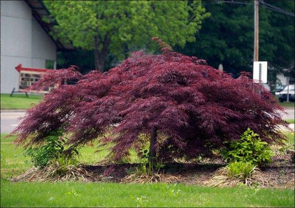 Same tree, courtesy of Your Garden Sanctuary