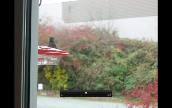 Hummingbird at the feeder.