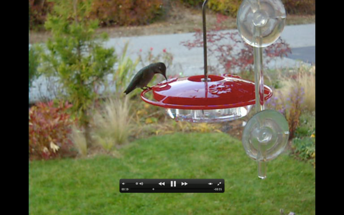 Screen shot of hummingbird at the front window.