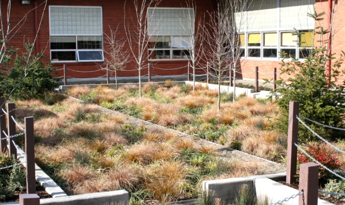 A Portland Oregon Middle School award-winning rain garden.