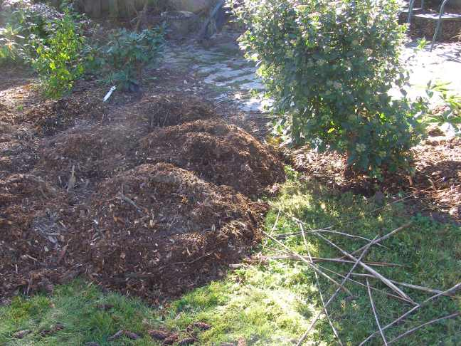 Very warm pile of wood chips already beginning the composting process.
