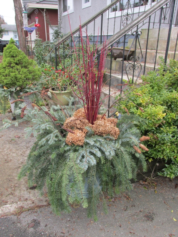 This container had the faded mums, so I'm basically starting with an empty space. So the red dogwood branches provide the height in place of the shrub or tree in the others.