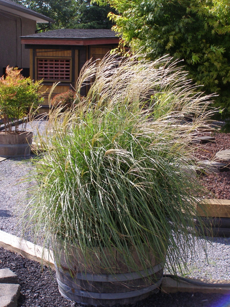 """Feathery grasses that """"flow"""" in the breeze."""