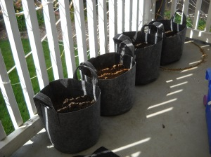 5 Gallon cloth containers. these dry out FAST.