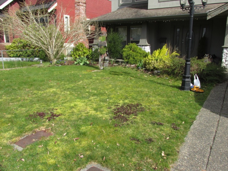 West facing front yard.