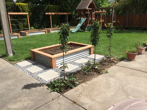 Raised beds made of clear cut cedar and corrugated steel, 4' x 6'