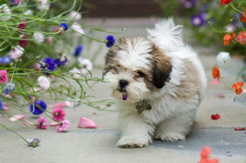 Photo Credit  Pet Plan