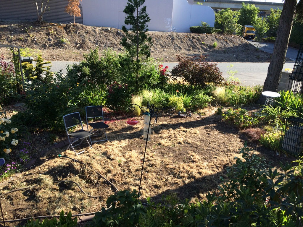 Evolution of the pond real life garden solutions for Garden pond life