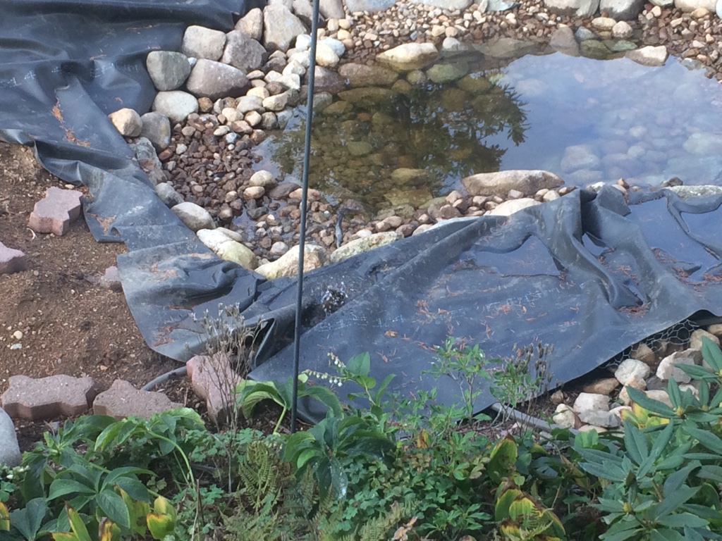 Evolution of the pond real life garden solutions for Koi pond hiding places