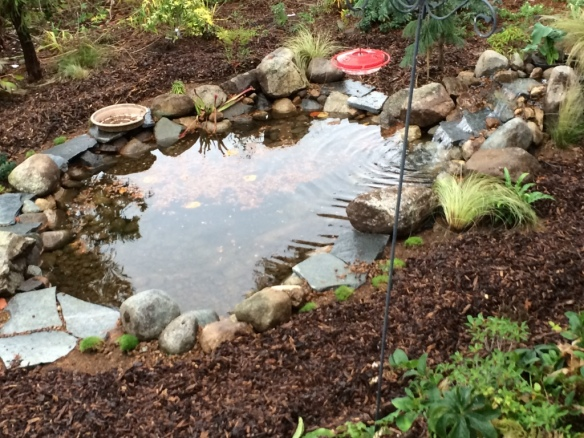 pond 13