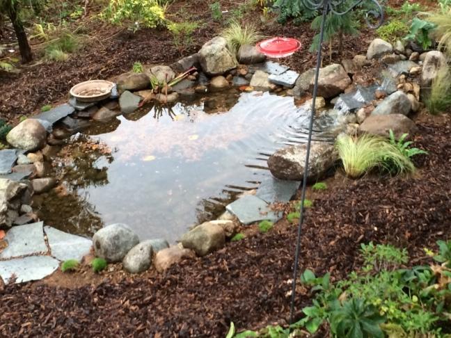 Front yard pond