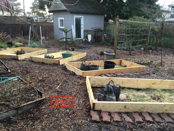 New raised beds, positioned radially leaving open wedges between them. Low growing annuals and perennials in those wedges will attract pollinators and beneficial insects.